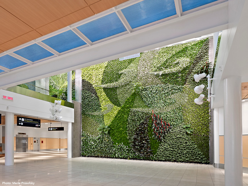 Photograph of Living Wall in the arrivals hallway