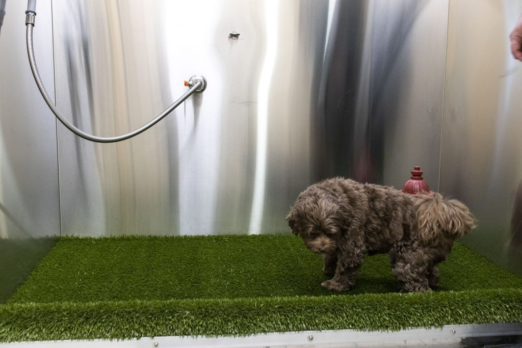 Pet Relief Room, Cherri feeling out the turf