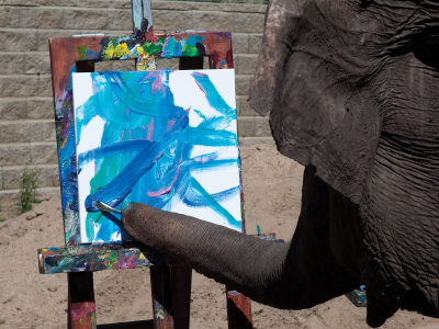 Photograph showing Lucy the Elephant from the Edmonton Zoo paining a picture on a canvas